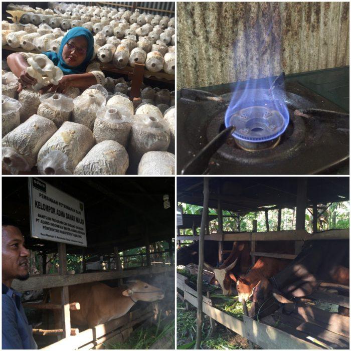 Budidaya Jamur dan produksi Biogas di desa Masingai